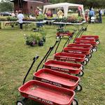 The Bluebonnet Master Gardeners held their annual plant sale in conjunction with the Spring Picnic - customers use little red wagons to take their plant treasures to their cars.